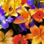 Floral Colour Schemes-3